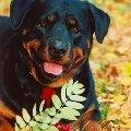 Осенний портрет Эйли