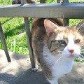 Эту кошечку мы встретилм в г.Анапа и она нам с удовольствием позировала...