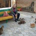 все это кошки г. Анапа