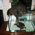 Китти и Черепашуля:)