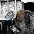 Рауль знакомится с птенчиком