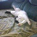 Очень я люблю поспать<br /> И в кошачьих снах мечтать,  <br /> Как хочу верчусь во сне,  <br /> Весь диван достался МНЕ!