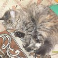 Моё маленькое существо!  По имени Соня!  Я назвала её так потому,  что она постоянно спит!