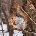 Я на веточке сижу,   да орешки всё грызу =:)