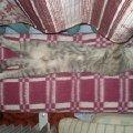 Люблю поспать:))))
