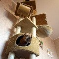 чей дом?