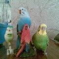 Найди живого попугая