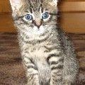 мой котёнок Кузя