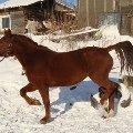 лошадку зовут Венера,  лошадь стоит в продаже. очень милая и добрая.