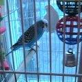 Это мой попугай Кокоша ему 5 месяцев
