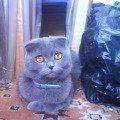 Любимая кошка Бонька!