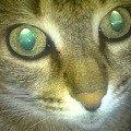 Моя любимая кошка Лизка!  18 лет,  а все такая же красавица!
