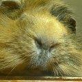 Большой нос Морской свиньи!