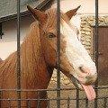 Лошадка Приживальского.Моя самая любимая лошадка