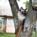 На дереве...