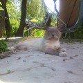 кот Гаврюша