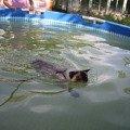а я плыву-плыв-плыву!