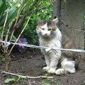 Мой кот - Сеня. Драчун ужасный!