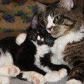 Папа и сынок<br /> Мейн Кун