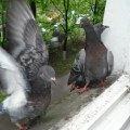 Это наши друзья-они живут у нас за окном.