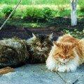 2 кота на колодце