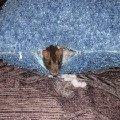 а подушку уже давно привыкли называть Сонькиной...