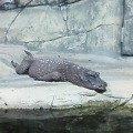 крокодил из Роева Ручья