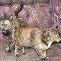 кошка мама и дочка живущие у автосервиса