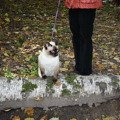 Котя на прогулке в парке.