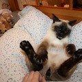 Это не котик,   это ХЫШНИК :)