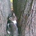 Я спряталась!