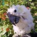 моя птичка в саду