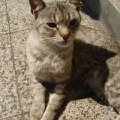 кошка 5 лет ,   город Бургас,   Болгария