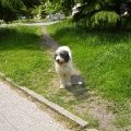 Моя собака Рей-11 летный-город Бургас,   <br /> Болгария