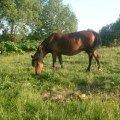 Соседская лошадь