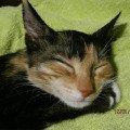 Сладкие кошачьи  сны