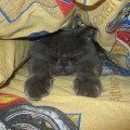 Я спряталась и сплю