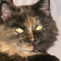 Кошка Малявочка