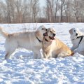 Встреча на о. Татышев 30.01.2011 Рома и детки: Даня и Джесика