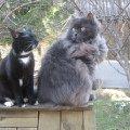 Коты-дачники