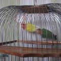 Мои любимые птички. Боятся меня )