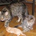 Круговорот кошек в природе