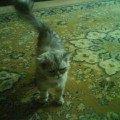 Буся,   персидский кот,   но очень драчлив и постоянно ходил разодранный и в язвах,  не давно умер,   кто-то из местных его лопатой прибил...