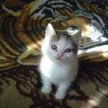 Моя кошечка Алиса.