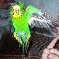 В полёте))) P.S: Не обращайте внимания на мою руку)