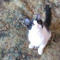 Бестолковые хозяева - незапланированных котят хотели усыпить в таком возрасте - взяты в приют..