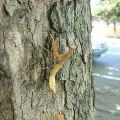Богомол на дереве