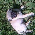 Это моя собака здесь ей 3 месяца<br />