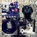 Это все мои кошки: Нюша-трёхцветная,  Нюся-беленькая с пятнами,  Луна-чёрная,  Маруся-такая же как Нюся только она ещё маленькая и у неё 1 глаз коричневый,   а другой голубой.