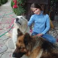 Собаки Марта и Лайма)))